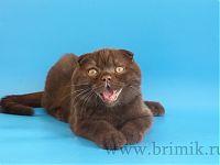 улыбка вислоухого кота