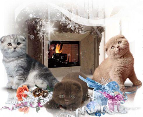 Продажа котенка в Москве