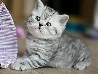 Очень добрый и ласковый  котенок