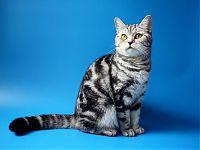 Кошка из рекламы вискас