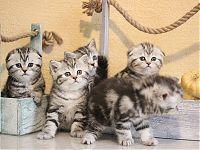 Котенок рисунчатых окрасов