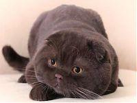 продажа котят котов кошек в Москве с фото ценами
