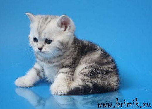 Плюшевых котят подрощеных и взрослых